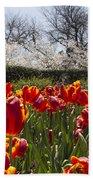 Tulips At Dallas Arboretum V39 Bath Towel