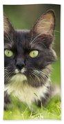 Turkish Angora Cat Bath Towel