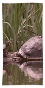 Turtle Struggling To Rest On A Log With Its Buddy Bath Towel