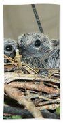 Two Baby Mourning Doves Bath Towel