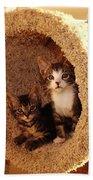 Two Cats In A Condo Bath Towel