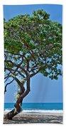 Two Heliotrope Trees On Tropical Beach Art Prints Bath Towel