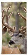Two Mule Deer Bucks With Velvet Antlers  Bath Towel