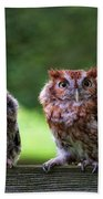 Two Screech Owls Bath Towel