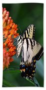 Two-tailed Swallowtail Bath Towel