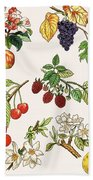 Unidentified Montage Of Fruit Hand Towel