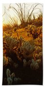 Usa, Arizona, Sonoran Desert, Ocotillo Bath Towel