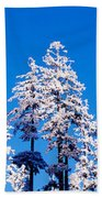 Usa, Oregon, Pine Trees, Winter Bath Towel