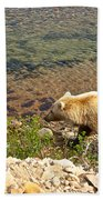 Very Light-colored Grizzly Bear In Moraine River In Katmai Nnp-ak Bath Towel