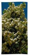 Viburnum Opulus Compactum Bush With White Flowers Bath Towel