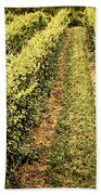 Vines Growing In Vineyard Hand Towel