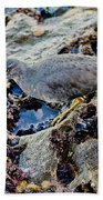 Wadering Tattler At Low Tide Bath Towel