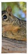 Wary Squirrel Bath Towel