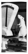 Weight Watcher Lab Rat Hand Towel