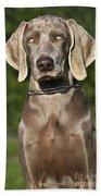 Weimaraner Hunting Dog Bath Towel