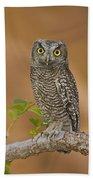 Western Screech Owl Juvenile Utah Bath Towel