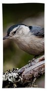 White-breasted Nuthatch Pictures 47 Bath Towel