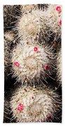 White Cactus Pink Flowers No1 Bath Towel