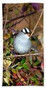 White Crowned Sparrow Bath Towel