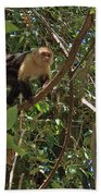 White-faced Capuchin Monkey In Manuel Antonio National Preserve-costa Rica Bath Towel