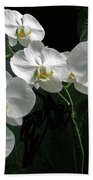 White Moth Orchid Phalaenopsis And Ferns Bath Towel