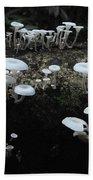 White Mushrooms Amazon Jungle Brazil 1 Bath Towel
