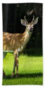 Young Buck Bath Towel