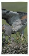 White-tailed Hawks At Nest Bath Towel