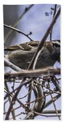 White-throated Sparrow With Berry Bath Towel