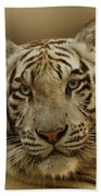 White Tiger II Bath Towel
