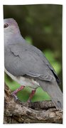 White-tipped Dove Bath Towel