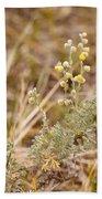 Wild Sage Wormwood Artemisia Figida Yellow Flower Bath Towel