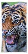 Wildcat IIi Bath Towel