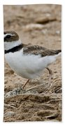 Wilsons Plover At Nest Bath Towel