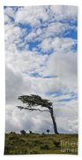Wind-bent Flag Tree In Tierra Del Fuego Bath Towel