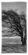 Windswept Tree On Knapp Hill Bath Towel by Paul Gulliver