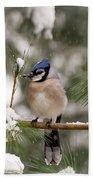 Winter Blue Jay Bath Towel
