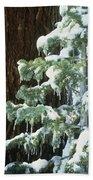 Winter Tree Sierra Nevada Mts Ca Usa Bath Towel
