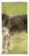 Wirehaired Pointing Griffon Bath Towel