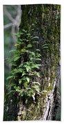 Wood Flora 2013 Bath Towel