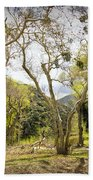 Woodland Glen In The California Vallecito Mountains Bath Towel