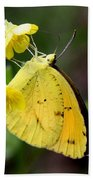 Yellow And Yellow Sulphur Butterfly Bath Towel