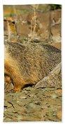 Yellow-bellied Marmot Bath Towel