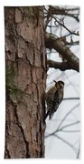 Yellow Bellied Sapsucker In The Pine Bath Towel