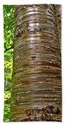 Yellow Birch Near La Chute In Forillon Np-qc Bath Towel