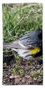 Yellow-rumped Warbler   Bath Towel