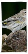 Yellow-rumped Warbler Hen Bath Towel