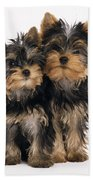 Yorkie Puppies Bath Towel