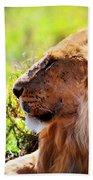 Young Adult Male Lion On Savanna. Safari In Serengeti Bath Towel
