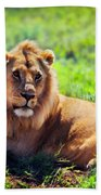 Young Adult Male Lion On Savanna. Safari In Serengeti. Tanzania Bath Towel
